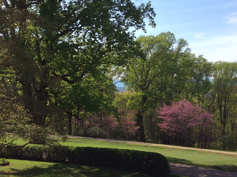 View north from Monticello's west lawn, 2015 by Amy Cools