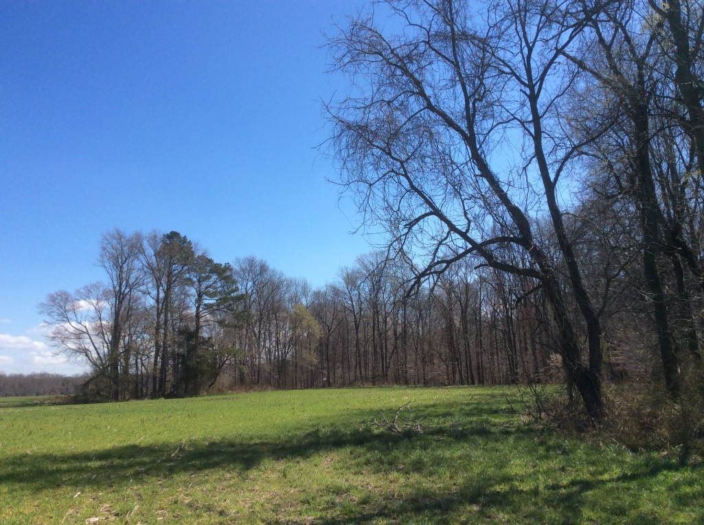 Ravine, Woods & Field at Frederick Douglass's birthplace between Tapper's Corner & the Tuckahoe