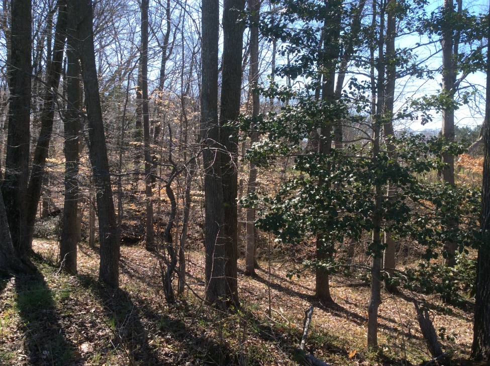 The ravine among the woods next to Frederick Douglass' birthplace