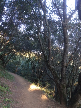 A Trail in Redwood Park, photo 2016 by Amy Cools