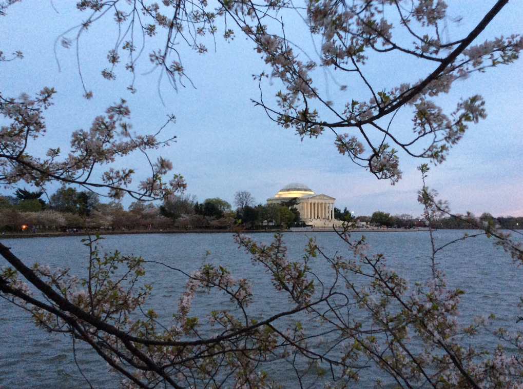 The Jefferson Memorial on the Tidal Basin among the cherry blossoms