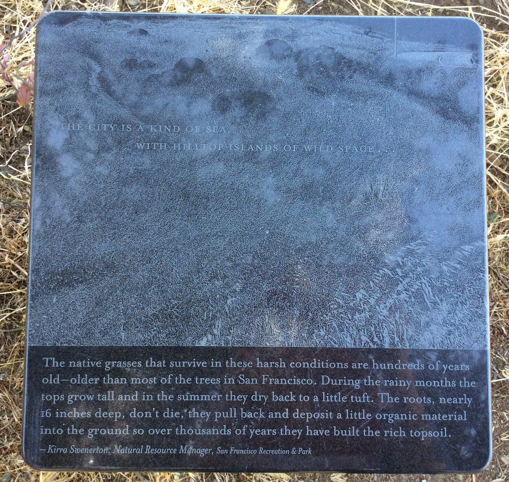 A marker which tells about the native San Francisco grasses here in McLaren Park