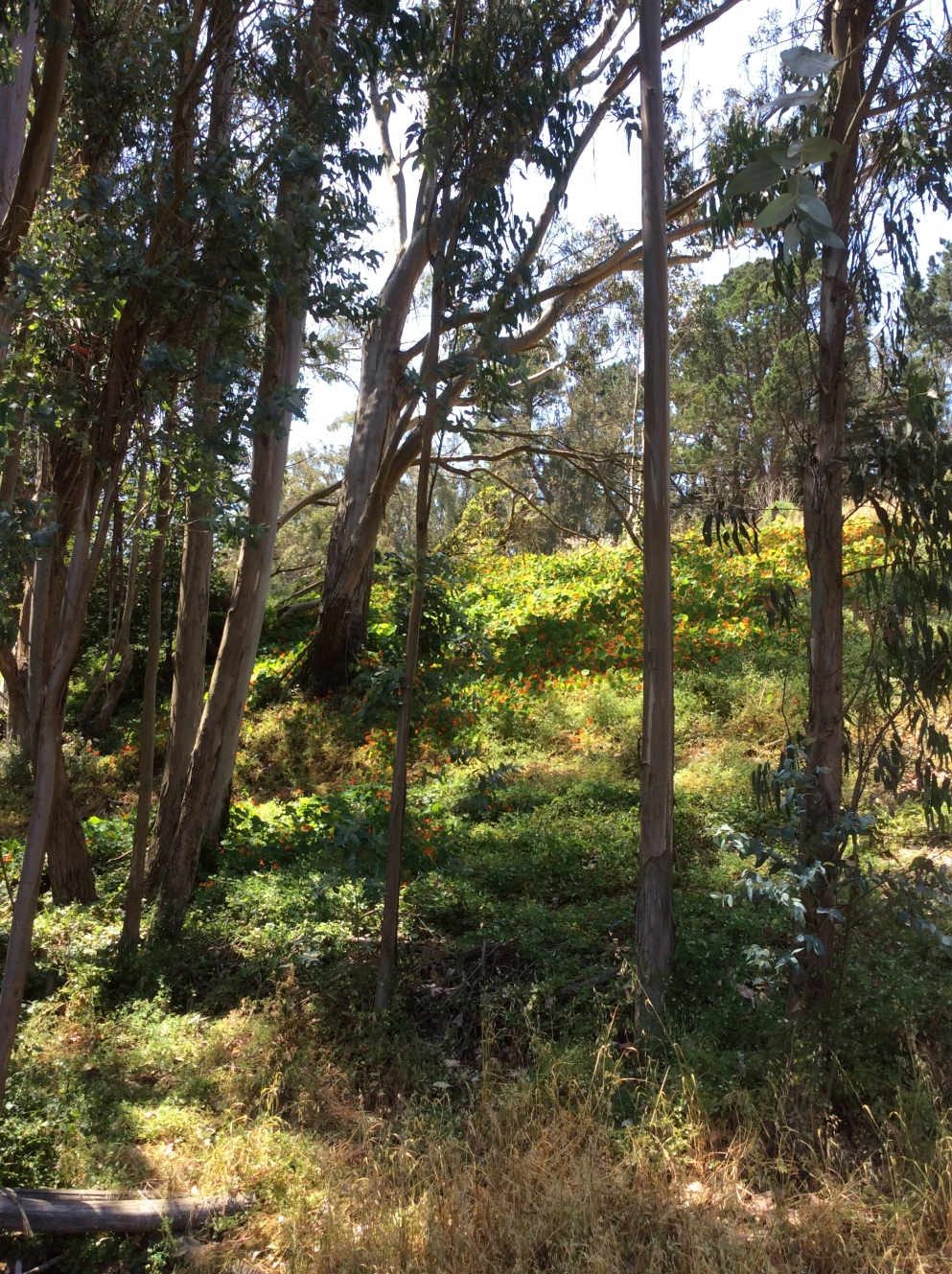 Eucalyptus, flowers, and greenery on a hillside