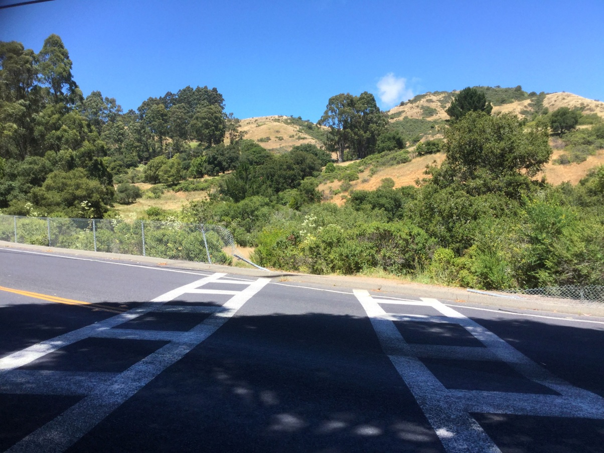 East Bay Hike With Plutarch June 11th 2017 Ordinary
