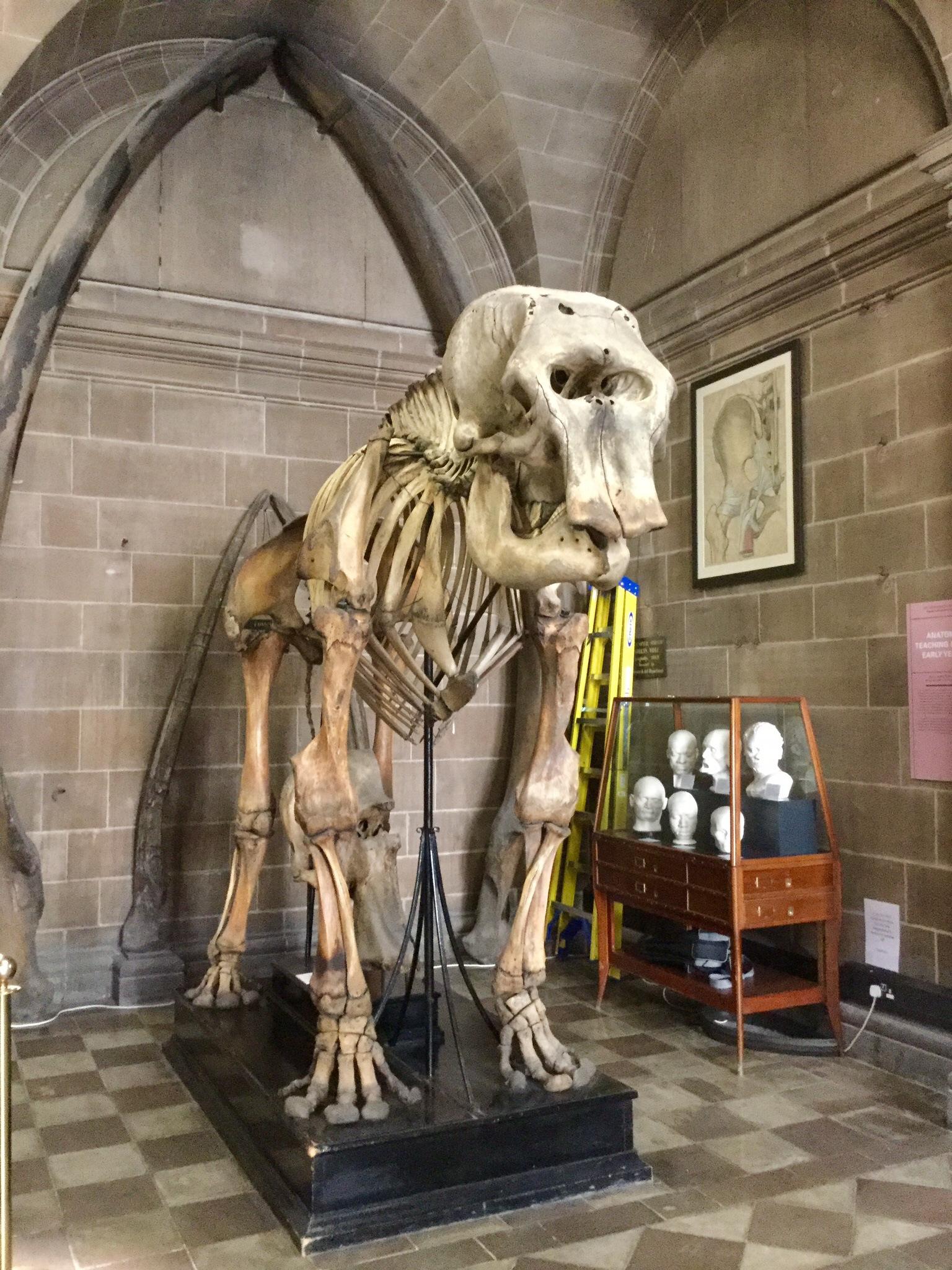 View in foyer of the Anatomical Museum, Old Medical School, University of Edinburgh, 2018 Amy Cools