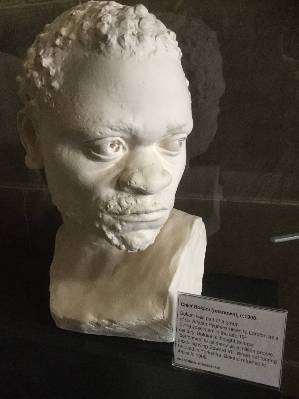 A portrait head of Chief Bokani in the Anatomical Museum collection, Old Medical School, University of Edinburgh, 2018 Amy Cools