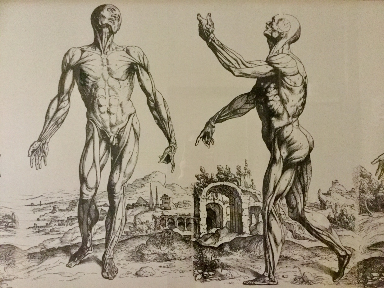 Andreas Vesalius | Ordinary Philosophy
